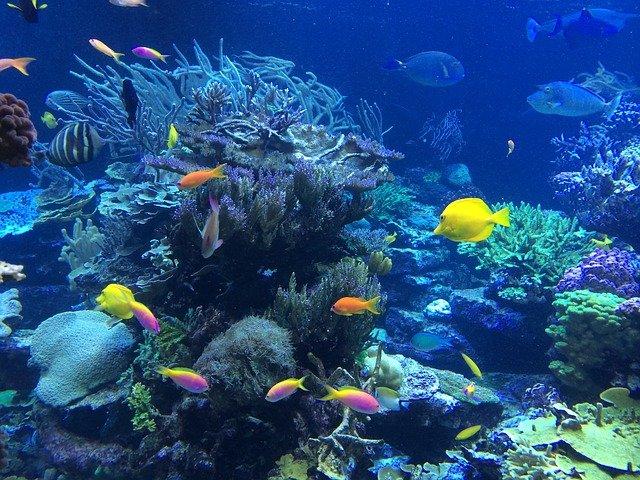 Buceo recreativo en arrecife