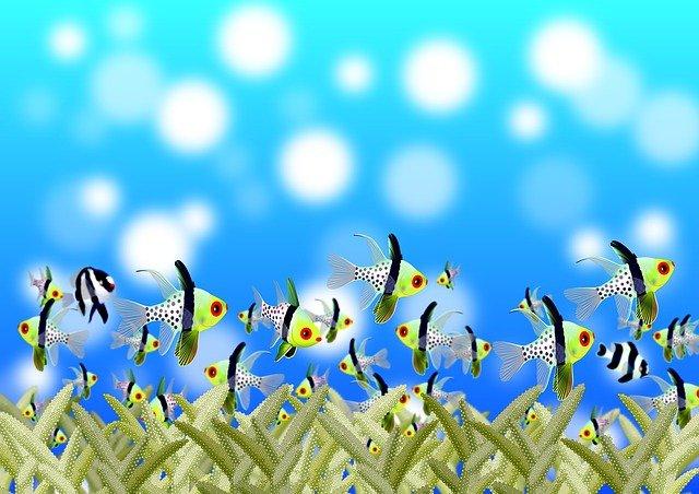 peces pequeños en el océano