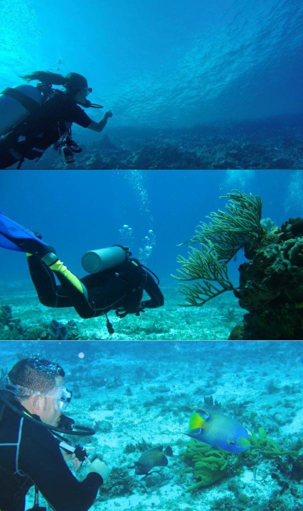 Ser buceador en el océano