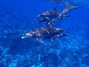 Delfines, una ventaja del segundo curso
