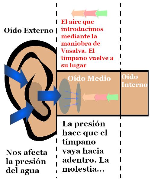 Ilustra lo que ocurre al compensar nuestros oídos al bucear en el descenso