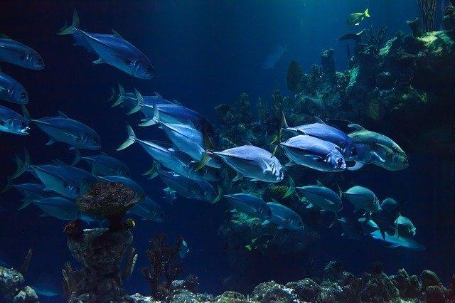 Peces en la inmersión de buceo profundo